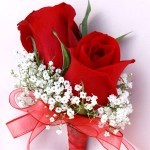 red roses and baby breath corsage